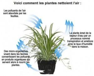 Voici comment les plantes nettoient l'air